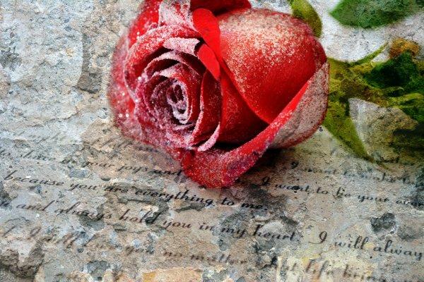 Palabras de sinceridad para un amor