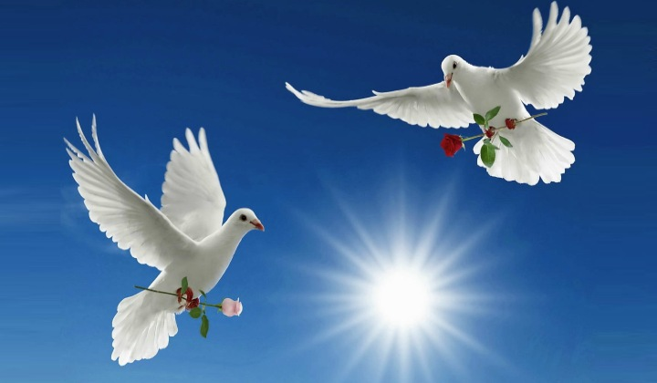Palabras de paz y amor